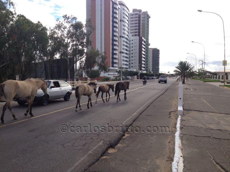 cavalos na avenida cardoso de sá
