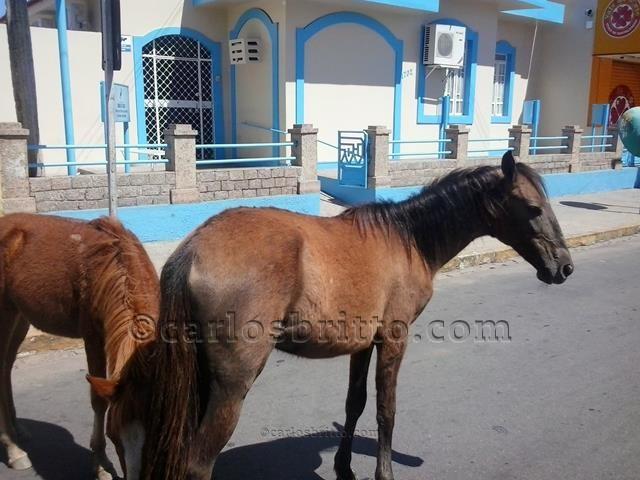 cavalos no centro