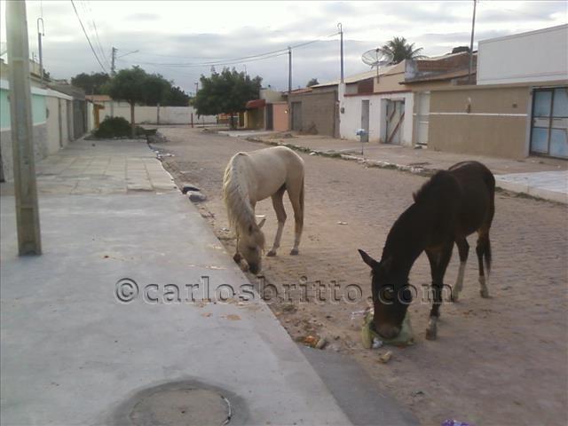 cavalos no josé e maria (2)