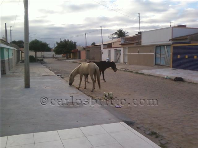 cavalos no josé e maria