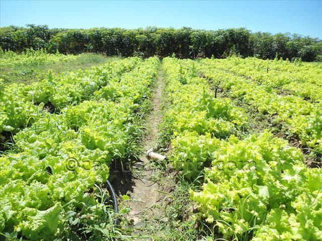 irrigação Tapera Sento Sé (2)