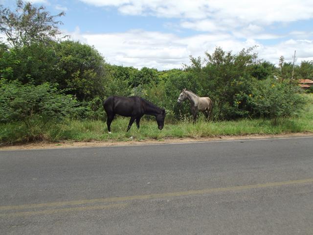 Cavalos N-9