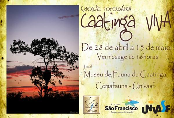 exposição fotográfica - caatinga
