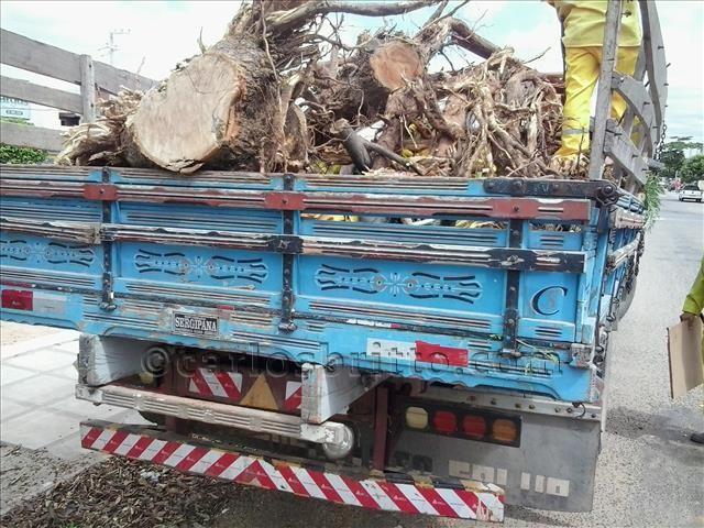 árvores cortadas