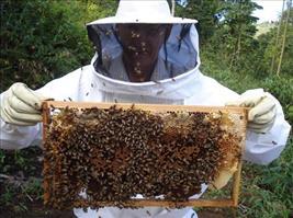 apicultura/Foto_NE-10