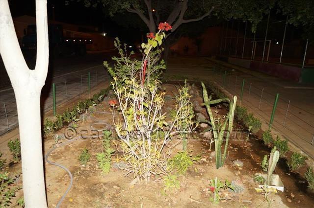 jardim cohab massangano2