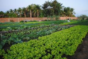 agroecoligia