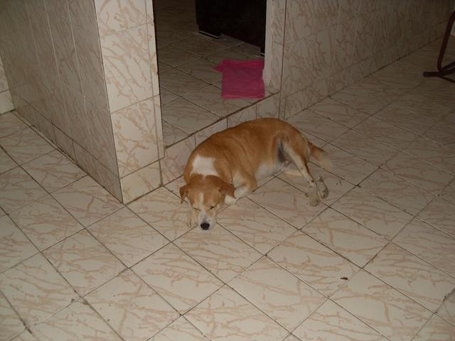 cão desaparecido_640x480