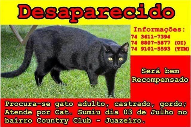 cat_640x426