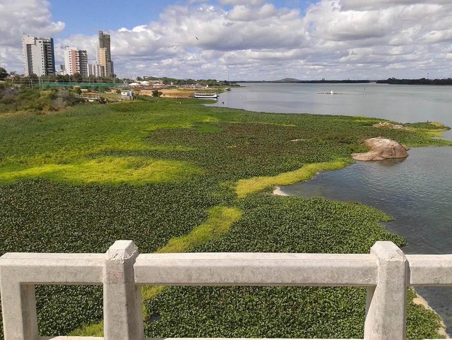Baronesas avançam no Rio São Francisco em Petrolina e já chegam ...
