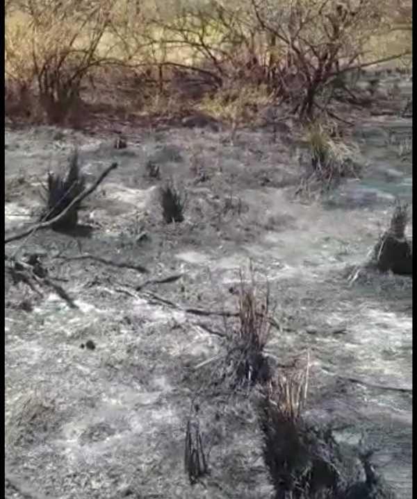 local queimado distrito industrial