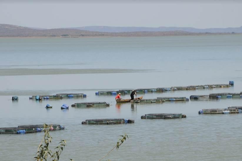 piscicultura-artesanal-norte-da-bahia
